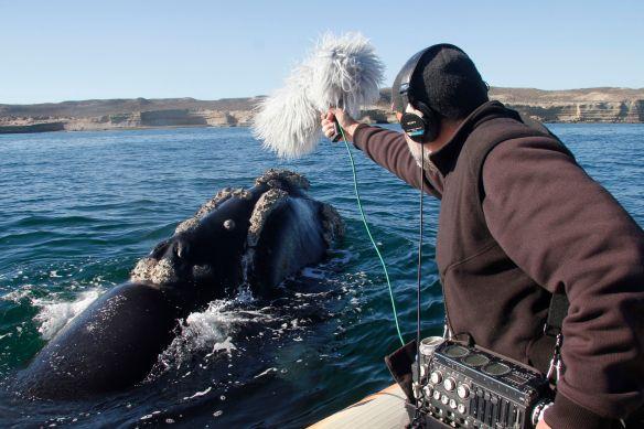 Carlos de Hita en pleno registro de una ballena franca austral para -El faro de las Orcas-.